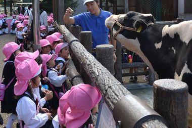 飼育員のお兄さんが、牛に餌をあげてみせてくれたよ。