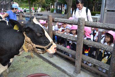 牛の顔って大きいね。