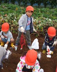 10月26日 初めてのお芋掘り・・・年少さん・・・