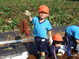 10月 お芋掘り遠足