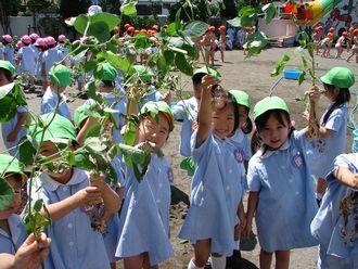 「枝豆の収穫」 H21.7.14(火) 晴れ