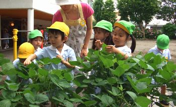 「赤ちゃん枝豆」 H21.6.29(月) 晴れ
