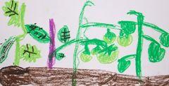 まだ緑色の若いトマト、ナスの茎は紫色、キュウリの葉はギザギザです。よく見てますね。