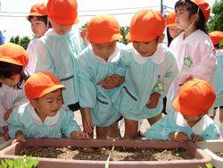 「芽がでた枝豆」 H21.5.18(月) 晴れ